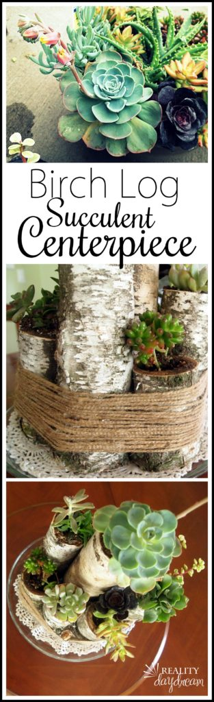 Make this rustic centerpieces with Birch Logs and Succulents! {Reality Daydream}