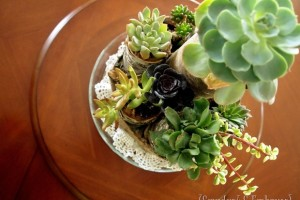 Succulent Centerpiece using Birch Logs & Twine!