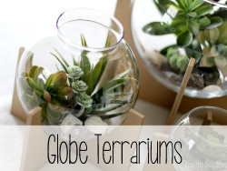 Step-by-step tutorial to make globe terrariums.