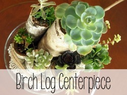 Succulent Centerpiece using Birch Logs {Sawdust and Embryos}_thumb