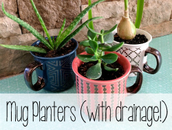 Turn-any-cute-mug-into-a-little-planter-pot-by-drilling-your-own-drainage-hole-with-a-Diamond-Bi