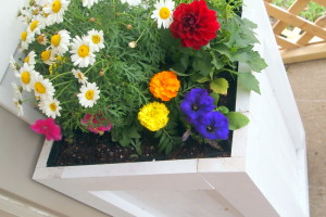 Build your own Planter Boxes!