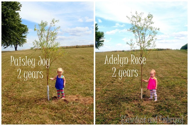 Plant a tree the year your baby is born, and then take a picture of them with it every year on their birthday! {Sawdust and Embryos}