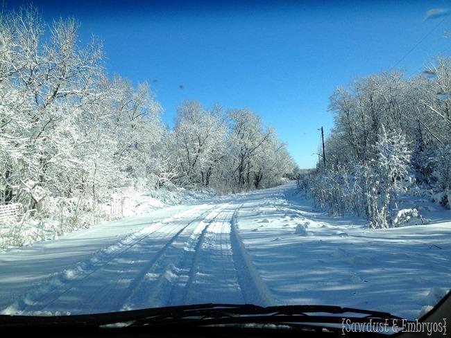 Winter Wonderland {Sawdust and Embryos}