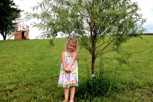 4-Year-olds and Annual Willow Pics