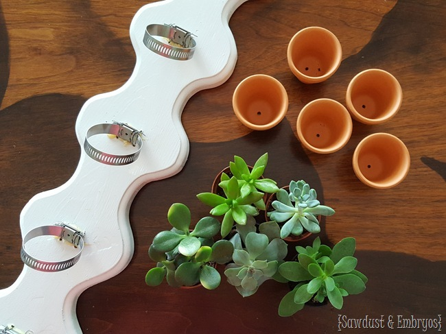 Make your own simple vertical succulent planter using hose clamps and tiny terra cotta pots {Sawdust and Embryos}