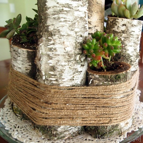Use birch logs to create a unique centerpiece... with succulents too! {Sawdust and Embryos}