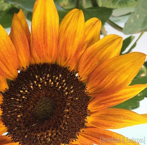 Gorgeous sunflower photography by Michelle at 'Simplify Live Love'