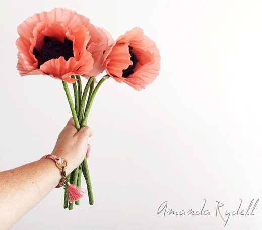 Gorgeous pink poppies by Amanda Rydell