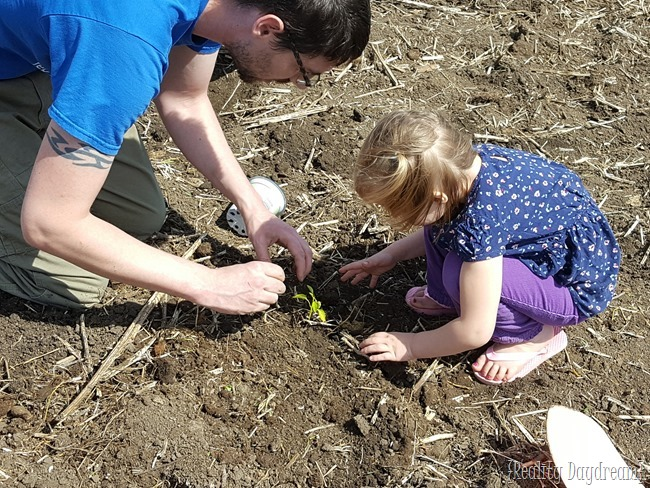 Daddy and Della planting tomatos {Reality Daydream}