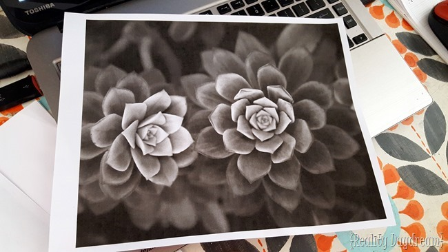Succulent photography by Ruby and Luna... inspiration for wood stained table {Reality Daydream}