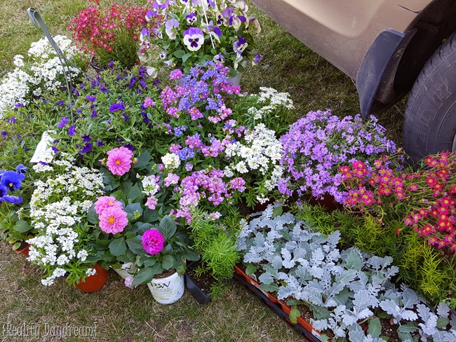 Variety of flowers for the hanging gutter planter {Reality Daydream}