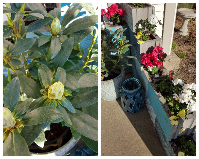 A variety of plants to fill the corner planter