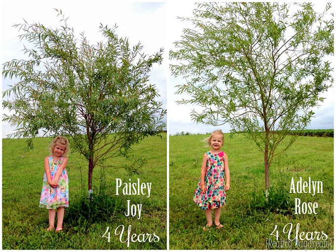 Annual Willow Tree Pics! 4 years {Sawdust and Embryos}