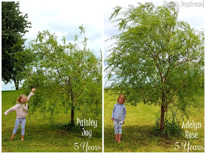 Twins' Annual Willow Tree Pic! {Reality Daydream} (2)