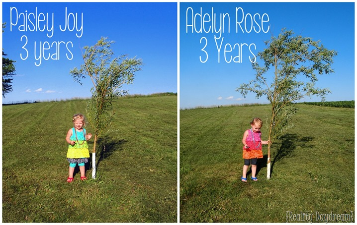 Yearly Willow Pics {Age 3} SAWDUST AND EMBRYOS