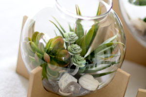 Make This: Cross Base Succulent Terrariums