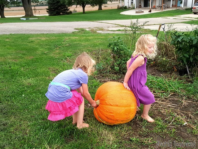 Giant harvest of pumpkin! {Reality Daydream}