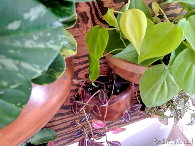 Make a vertical planter 'living wall' using wooden bowls cut in half! {Reality Daydream}
