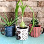 Make regular mugs into planters by drilling a drainage hole with a Diamond Bit! {Reality Daydream}