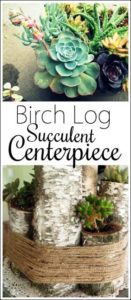 Make-this-rustic-centerpieces-with-Birch-Logs-and-Succulents-Reality-Daydream-313x1024 (1)