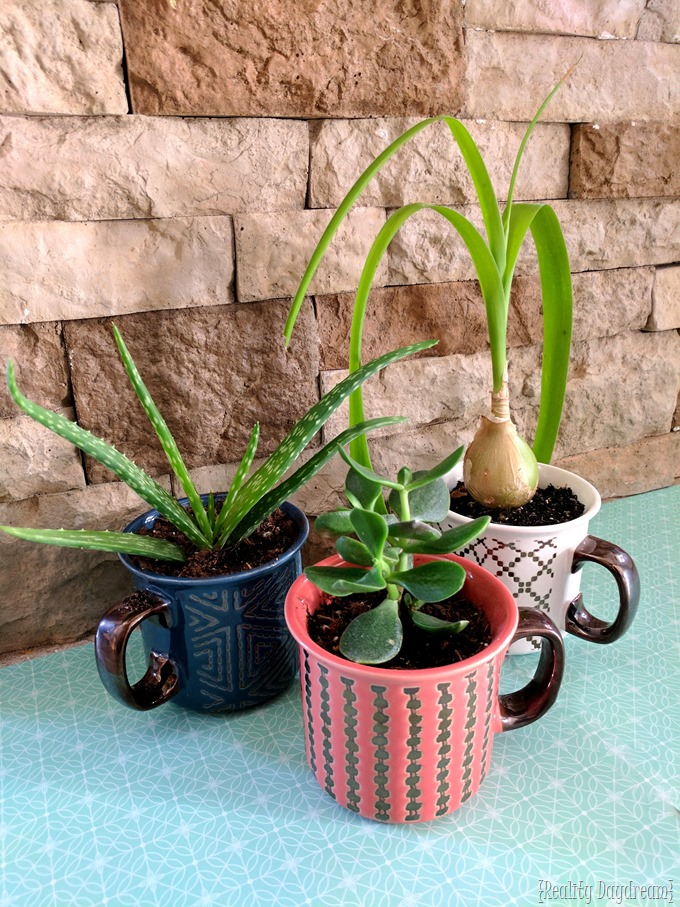 Turn any cute mug into a little planter pot by drilling your own drainage hole with a Diamond Bit! {Reality Daydream}