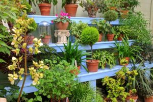 The beginner's Guide to a Green Thumb {keeping plants alive}