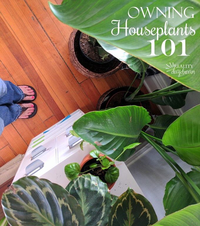 Lots of tips for curing your black thumb and keeping houseplants alive! 101 {Reality Daydream}