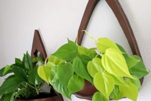 Wall Sconce DIY Planter! Using repurposed wooden bowls