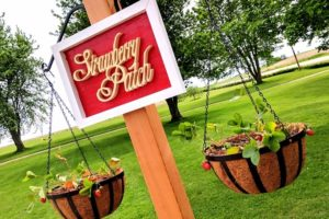 Free-Standing Strawberry Garden w/ Hanging Planters