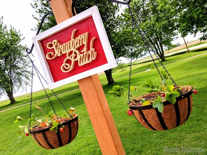 'Strawberry Patch' Free-standing garden with hanging strawberry planters {Reality Daydream}
