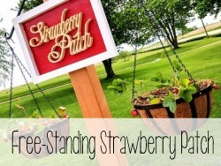 Free-Standing Strawberry Patch