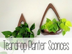 Teardrop Planter Sconces