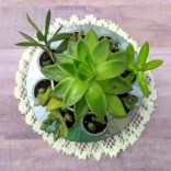Upcycled DIY Succulent Planter Idea