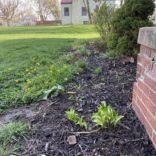 Garden Update – Bed Redefining!